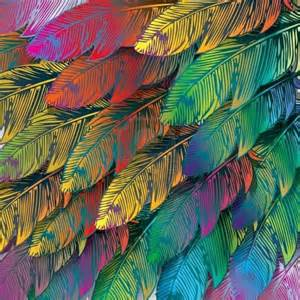colorful feather colourful feathers feathers leaves