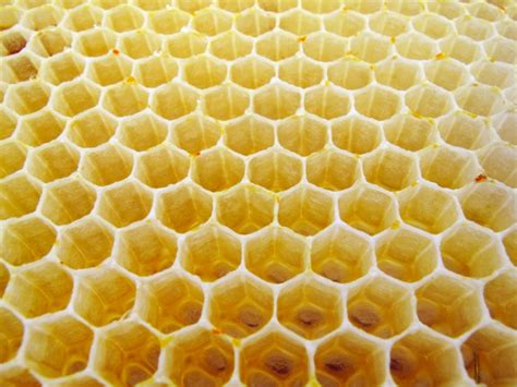 regular pattern formation in real ecosystems how honeycombs can build themselves nature news comment