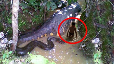 Top 10 Most Dangerous Animals by Top 10 Deadliest Animals In Asia