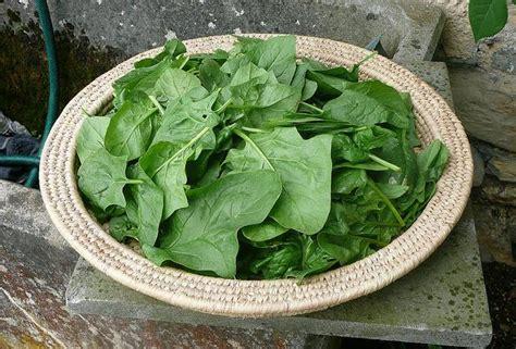 magnesio alimentazione 10 alimenti ricchi di magnesio dieta alimentazione e