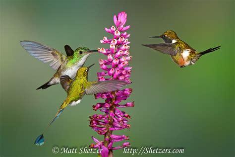hummingbird medicine doowans news events