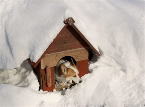 winter dog houses winter dog house plans escortsea