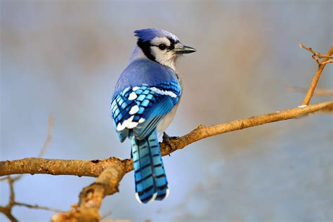 10 most beautiful and fascinating birds around the earth