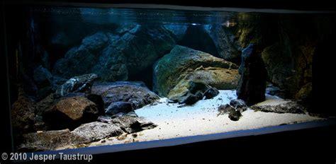 2010 aga aquascaping contest entry 15