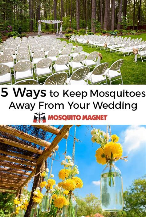 how to keep mosquitoes away from backyard 222 best mosquito facts information images on pinterest