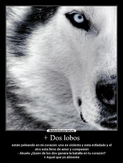 imagenes de lobos en 4k dos lobos desmotivaciones