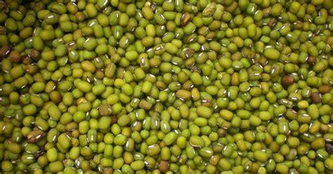Kacang Hijau Organik kumpulan budidaya budidaya kacang hijau