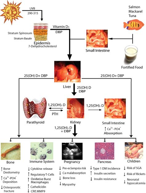 s protein deficiency and pregnancy implications of vitamin d deficiency in pregnancy and