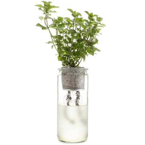 indoor herb garden self watering carbon steel pot planter eco planter mint modernsprout