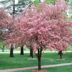 Trees To Plant In Backyard Landscaping 10 Easy Care Garden Tips