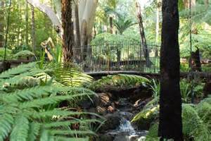 Royal Botanic Gardens Melbourne Opens Reved Fern Gully Royal Melbourne Botanical Gardens