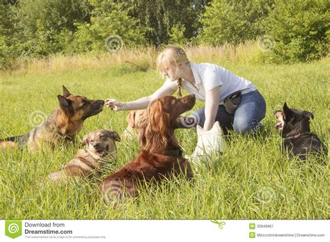 dogs 2 trainer trainer feeding royalty free stock photography image 33949967