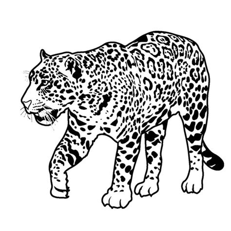 Coloring pages picture 28 printable rainforest animal coloring