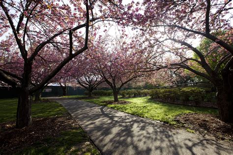 Superb Japan Gardens #6: Brooklyn_Botanic_Garden.JPG