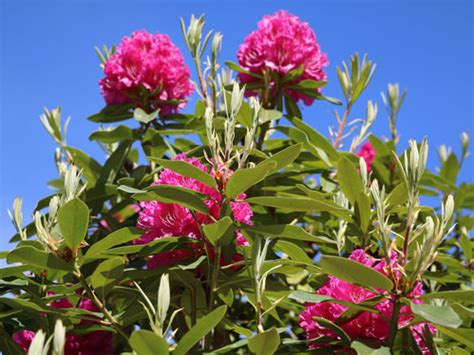 piante da giardino resistenti al gelo 5 piante da esterno che resistono al freddo one giardinaggio