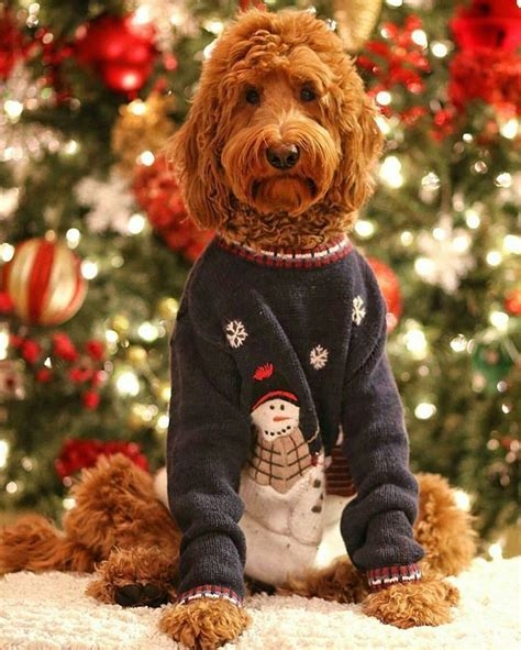 cutest christmas puppies fallinpets