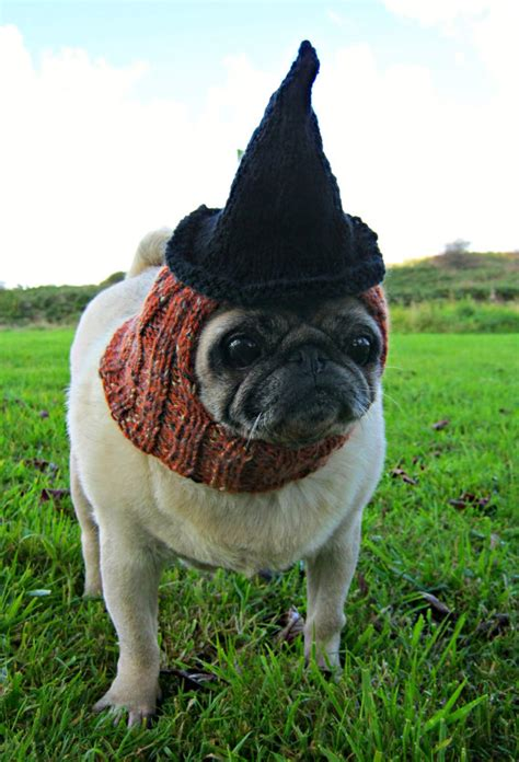 pug costume ideas 10 pug costumes best costumes