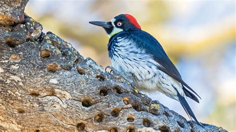 why global climate change may be putting more birds in the
