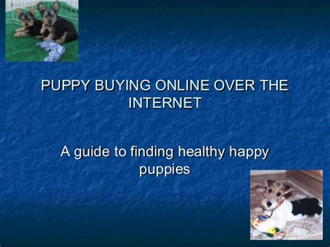 how to buy a puppy safely how to buy a puppy safely 15 steps with pictures pets world