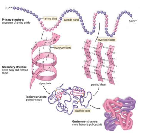 proteine o aminoacidi per massa proteine aminoacidi e supplementi proteici per la