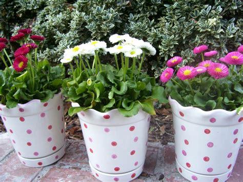 Schöne Balkonpflanzen by G 228 Nsebl 252 Mchen Als Balkonpflanze Den Balkon Sch 246 Ner Machen