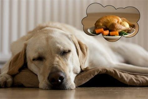can you give dogs turkey thanksgiving tips can dogs eat turkey times guide to dogs