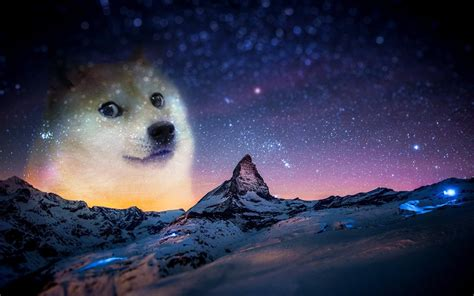 Doge Meme Wallpaper - snow night animals doge memes wallpapers hd desktop