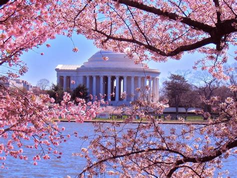 cherry blossom festival dc 4 day bus tour to washington dc from toronto for cherry