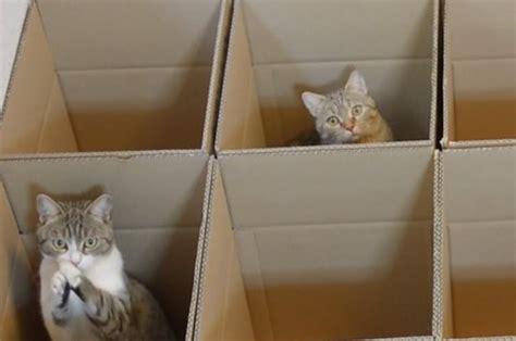heres  heaven    cats