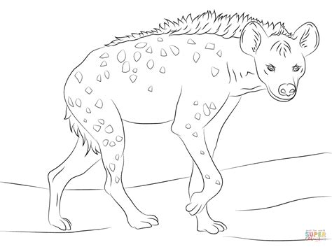 spotted hyena coloring page free printable coloring pages