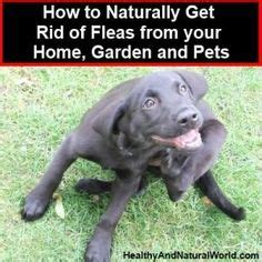 how to get rid of fleas in backyard top 10 flea and tick prevention tips flea and tick