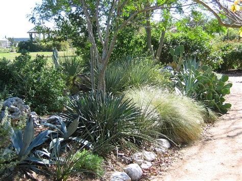 xeriscape design meaning dr dan s garden tips did someone say xeriscaping
