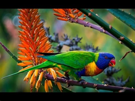 colorful birds colourful birds colorful bird from jungle and we