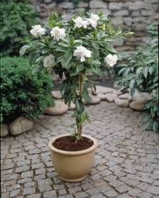 patio tree care patio plant trends what s brighter blooms nursery