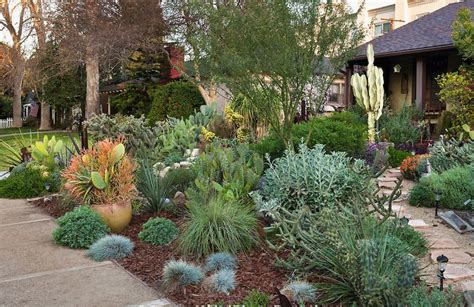 drought tolerant front yard pin by riddell on garden