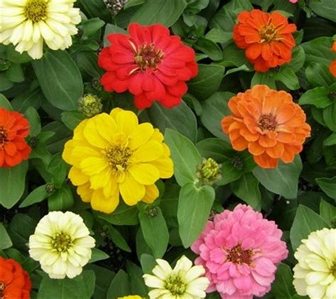 annuals vs perennials what s the difference palmers