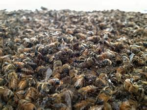 dizzying op made from dead bees has an unlikely