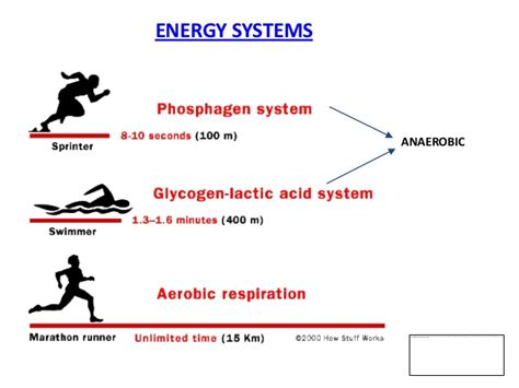 carbohydrates usage module 4 mcc sports nutrition credit course energy