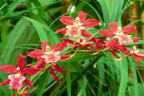 imagenes hermosas de orquideas hermosas orqu 237 deas en la planta 74268