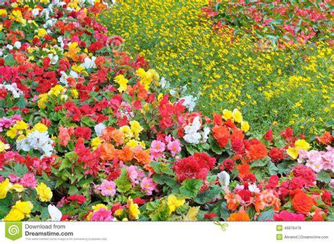 Bright Garden Flowers Bright Garden Flowers Stock Photo Image 46878478