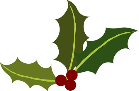 images of christmas holly leaves free vector graphic green holly berries christmas