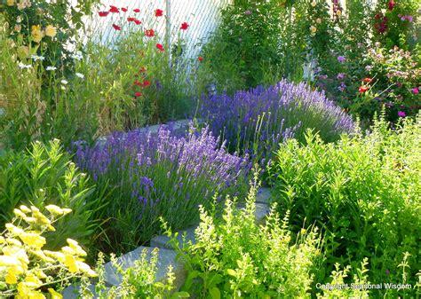 drought tolerant ornamental grasses california drought
