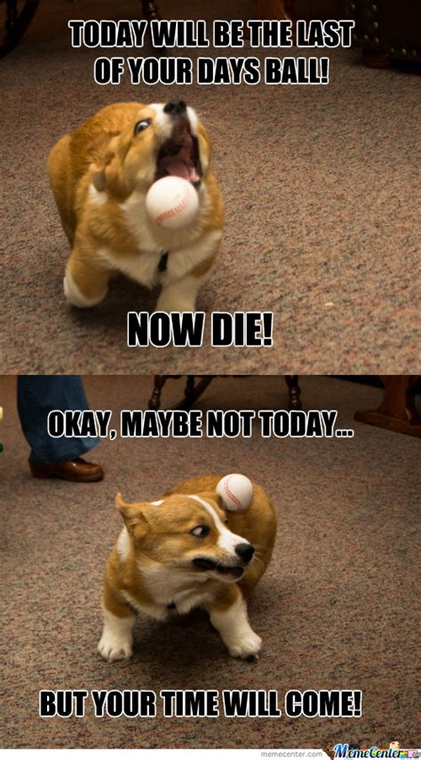 Ball Memes - funny dog ball with teeth dog breeds picture