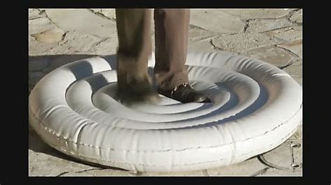 inflatable dog bed snoozy ortho air bed 187 listpageresources 187 petco video
