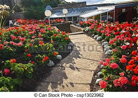 pelargonium tuin stock beeld van mooi geranium bloemen tuin rood