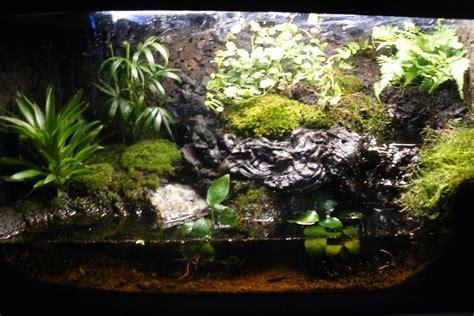 aqua terrarium designs terrarium design extraordinary hibian terrarium hibian terrarium tropical terrarium
