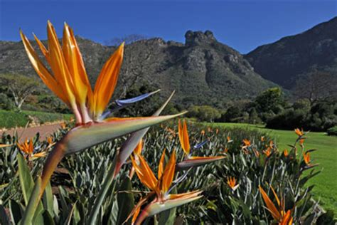 national botanical gardens south africa indigenous plants