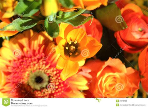 imagenes de flores libres ramo de flores ex 243 ticas fotos de archivo libres de