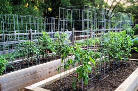 build tomato cage how to build the best tomato cage for your plants joe