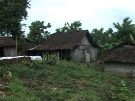 Bibit Sapi Jateng kung ternak sapi karangkumpul demak